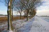 pic of row trees  - Row of trees along a snowy road in winter - JPG