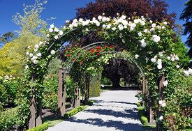 stock photo of species  - Lady Norwood Rose Gardens in Christchurch Botanical Gardens New Zealand is the home of this rose arch established in 1868 the garden mixes native forest with planted species - JPG