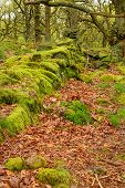 pic of contortion  - Image of pathways through old twisted gnarly trees and moss covered rocks - JPG