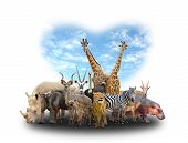 picture of herbivore animal  - group of africa animals with heart shape sky on white background - JPG