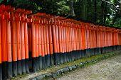 picture of inari  - Torii gates at Fushimi Inari - JPG