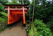stock photo of inari  - Torii gates at Fushimi Inari-Taish shrine in Kyoto Japan ** Note: Soft Focus at 100%, best at smaller sizes - JPG