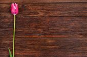 stock photo of bittersweet  - Pink tulip flower on old wooden table background - JPG