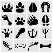pic of pet frog  - People and pets footsteps in grey squares - JPG