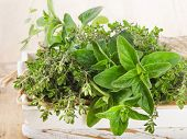 stock photo of oregano  - Fresh herbs - JPG