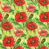 Постер, плакат: Red Poppies Flower Watercolor Illustration