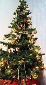 picture of 24th  - a Christmas tree - JPG