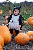 stock photo of baby spider  - a little boy dressed up in his spider costume at the pumpkin patch - JPG