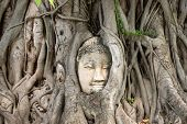 Ayutthaya Buddha Head statue with trapped in Bodhi Tree roots at Wat Maha That (Ayutthaya), Thailand poster