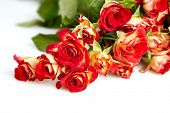 picture of bereavement  - roses in a bunch isolated on a white background with space for text - JPG