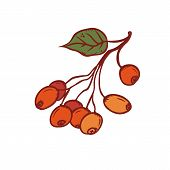 Autumn Bunch Wild Berries Wild Rose September Or October Seasonal Harvest. Vector Outline Illustrati poster