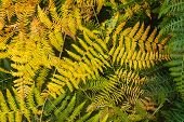 Close Up Of Fern Leaves Nature Background. Nature Background Of Fern Leaves. Fern Leaves Nature Back poster