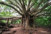 Banyan Tree Maui, Hawaii