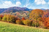 Trees In Fall Foliage In Mountainous Countryside. Beautiful Autumn Landscape In Afternoon Light. Gra poster