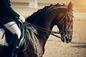 Equestrian Sport. Portrait Sports Brown Stallion In The Double Bridle. Dressage Of Horses In The Are poster