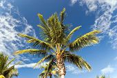 Palm Trees On A Windy,Sunny Day poster