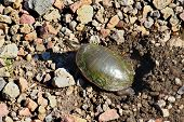 pic of winnebago  - Painted Turtle  - JPG