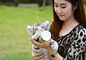 pic of white tiger cub  - pretty women feeding baby white bengal tiger - JPG