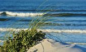 stock photo of dune grass  - Close up of sand dunes with dune grass - JPG