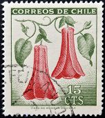 CHILE - CIRCA 1968: Stamp printed in Chile shows Lapageria Chilean bellflower or copihue circa 1968