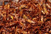 picture of maggot  - grasshopper fried one of insect food in Thailand - JPG