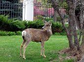 Deer In The City poster
