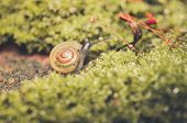 stock photo of garden snail  - Snails and moss macro shot in the garden or forest