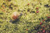 pic of garden snail  - Snails and moss macro shot in the garden or forest - JPG