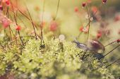 image of garden snail  - Snails and moss macro shot in the garden or forest - JPG