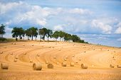 pic of hay bale  - Field with golden hay bales during autumn harvest time in France Europe - JPG