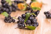 picture of aronia  - choke - JPG