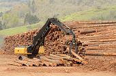 picture of track-hoe  - A track hoe excavator log loader working the log yard stack at a lumber processing mill that specializes in small logs - JPG