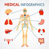 foto of internal organs  - Medical infographic set of human skeleton and internal organs vector illustration - JPG