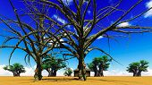 foto of baobab  - African village With baobabs and hut - JPG