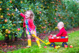 picture of hand-barrow  - Happy little children cute toddler girl and adorable funny baby boy brother and sister playing together in a beautiful fruit garden eating apples having fun on a wheel barrow ride enjoying a warm autumn day outdoors - JPG