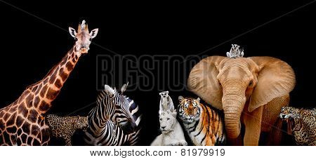 A Group Of Animals Are Together On A Black Background With Text Area. Animals Range From An Elephant
