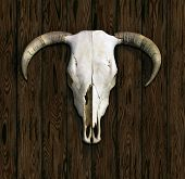 pic of cow skeleton  - Cow Skull with horns against a paneled wood background - JPG