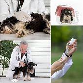 stock photo of ambulance  - Collage of veterinarian and pet images in veterinarian ambulance - JPG