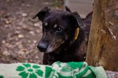 picture of begging dog  - sad dog in dog shelter in autumn - JPG