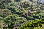 picture of canopy  - Mountain cloud rainforest canopies in Central America - JPG