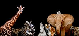 picture of species  - A group of animals are together on a black background with text area - JPG