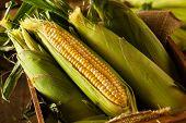 image of corn stalk  - Raw Organic Yellow Seet Corn Ready to Cook - JPG