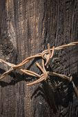 pic of barbed wire fence  - Metal twisted ends of barbed wire fence wrapped together on wooden fence post. ** Note: Soft Focus at 100%, best at smaller sizes - JPG