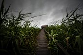 stock photo of trough  - Wooden path trough the reed outdoors at summer - JPG