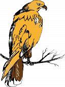stock photo of hawks  - grahic illustration red hawk on the tree - JPG