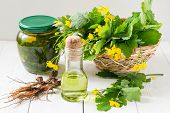 pic of infusion  - Celandine collected in a basket roots and the infusion of oil for herbal medicine - JPG