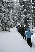 Light Blue Parka, Snowshoe Hikers In Woods
