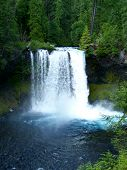 picture of mckenzie  - Koosah Falls on the McKenzie River - JPG
