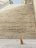 Yellow Cat Sitting On A Sun. Cat In The Street Of Valletta, Malta. Yellow Orange Kitten Relaxing On  poster