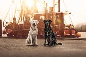 Two Cute Young Curious Dogs Pets Sitting And Looking Pretty In Front Of Sailing Boat During Holiday  poster